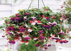 冬天容易开花的三种植物  每种都好养