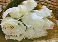 白玫瑰花语是什么 送白玫瑰代表什么意思