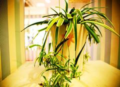 办公桌上放什么植物好 这四中值得选