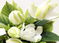 栀子花的养殖方法和注意事项 室内芳香四溢