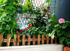 阳台栽培蔬菜 阳台菜园可以种哪些蔬菜