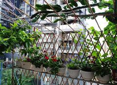 阳台菜园设计 如何在阳台栽培蔬菜