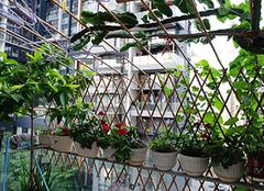 阳台菜园种菜 阳台怎么栽培蔬菜