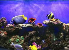 观赏鱼鱼缸怎么清理 养殖时要注意哪些呢
