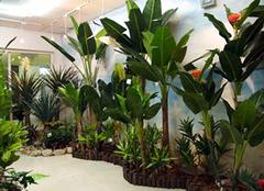 仿真椰子树怎么样 带你认识它