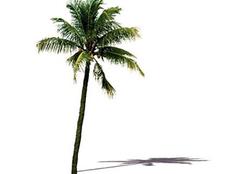 仿真椰子树的好处有哪些 其特征具体如何