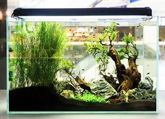 如何鱼缸造景 鱼缸造景步骤有哪些