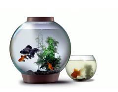 养风水鱼要注意什么  养风水鱼有什么讲究
