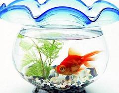 办公室养哪些鱼能旺财运  养鱼风水让你财运有余