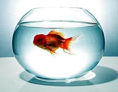 客厅养鱼有哪些讲究   客厅养鱼风水