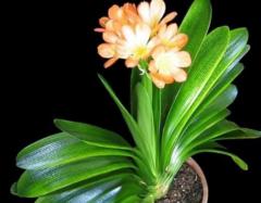 风水中最招财的植物 什么植物招财聚气