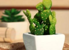 室内防辐射植物有哪些 室内防辐射植物排行