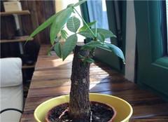 客厅植物怎么摆放好 有哪些风水上面的禁忌呢