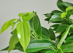 哪些植物能净化室内二手烟 提升空气质量