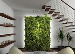 室内植物墙如何做?室内植物墙的做法