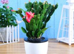 防辐射植物盆栽推荐 防辐射植物排行榜