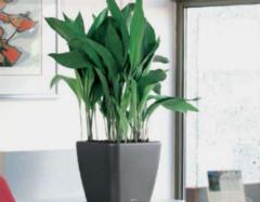办公室植物风水禁忌详解