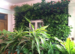 室内植物放置注意要点 植物不是想放就能放的