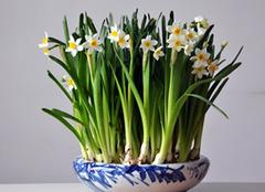 卫生间除异味植物有哪些 比空气清新剂还好用
