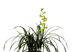 家居风水植物有哪些 心动就开始行动吧