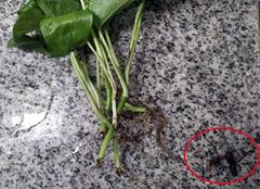 怎样预防水培植物发臭 有哪些小诀窍