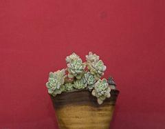 天然石头花盆制作过程教学 DIY属于自己的花盆