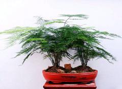 办公室养什么植物好  办公室放什么植物风水好