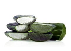 芦荟有哪些保健作用  芦荟的功效