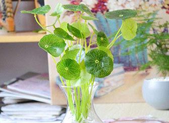 水培植物放什么能长得好?这些物品能救它