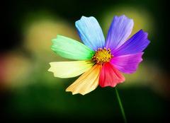 七色花花语是什么 七色花养殖方法
