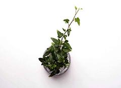 家里养植物的风水讲究 以下要点需谨记