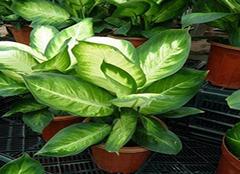 玄关放什么植物好 哪种植物利于玄关风水