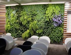家庭绿萝墙的制作方法是什么 都有哪些窍门