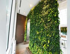 绿植墙的优点有哪些  多少钱一平米