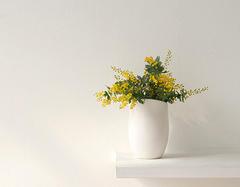 盘点几个室内最适合养殖的绿植品种