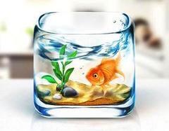 鱼缸怎么摆放招财 鱼缸放在什么位置招财