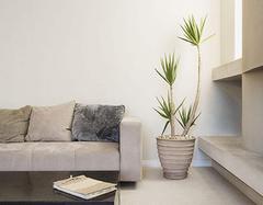 客厅摆放什么植物最好 植物摆放禁忌是什么