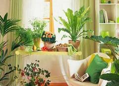 不适合放在卧室的植物有哪些 与健康息息相关