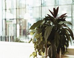办公室养殖什么植物好 为什么