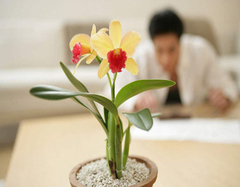 什么植物防辐射 办公室可以养殖哪些盆栽植物