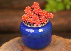 多浆植物分类介绍 有哪些特性和应用