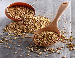 荞麦有什么营养价值  孕妇可以吃荞麦吗