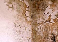 墙面潮湿的原因有哪些  墙面潮湿掉皮什么原因