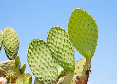 什么植物防辐射效果最好 常见的几种植物种类