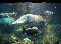 揭秘:中国最美湖泊 暗藏8亿公斤的鱼