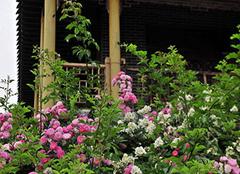  适合室内养殖的花卉有哪些 给家带来无限可能