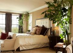 卧室放什么植物风水好 卧室植物摆放风水禁忌