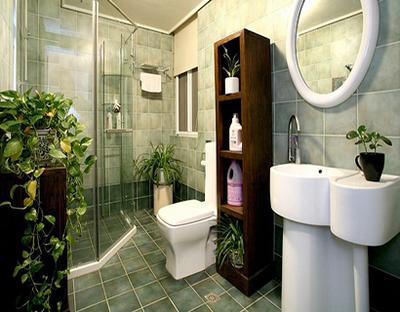 卫生间植物摆放风水  卫生间放什么植物风水