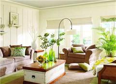 客厅养什么植物风水最好 应该摆放哪些植物呢