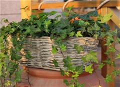 家里摆放什么植物最旺财 十二生肖养什么植物好呢